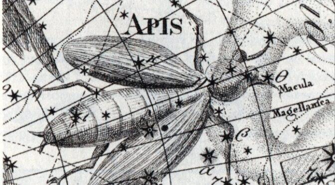 Das Sternbild Musca – Fliege