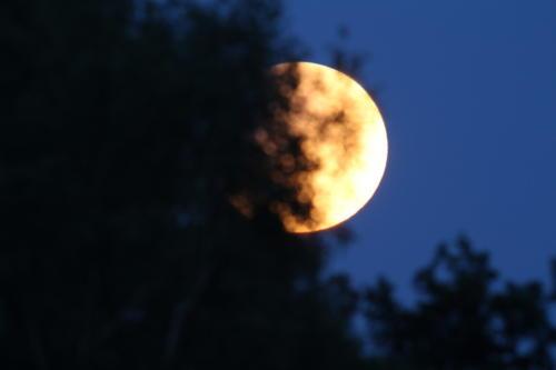 Der Mond befand sich bereits im Halbschatten der Erde, als er hinter den Bäumen am Horizont hervorkam.